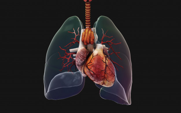 Bronchitis And The Best Home Remedies